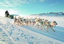Norden-Hundeschlitten