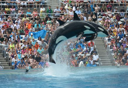 Orcas, SeaWorld