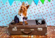 Hund Reise Haustier