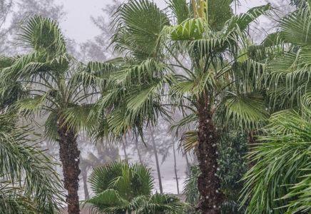 phuket_Regen
