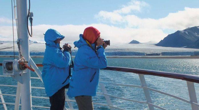 Faszination Tierwelt der Arktis