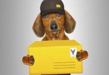 Hund Postbote
